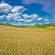 Golden hay field in green agricultural landscape — Stock Photo #59113945