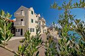 Bibinje village olive tree view — 图库照片