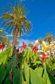 Split Riva palms and flowers — Stock Photo