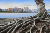 Big root tree infront of city building concept forest and urban  — Stock Photo