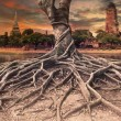 Big root of banyan tree land scape of ancient and old pagoda in — Stock Photo #52933581