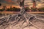 Big root of banyan tree land scape of ancient and old  pagoda in — Stockfoto