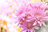Pink gerbera flowers bouquet with blurry background and copy spa — Stock Photo