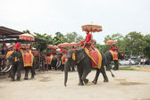 AYUTHAYA THAILAND-SEPTEMBER 6 : elephant for tourist riding read — Stock Photo