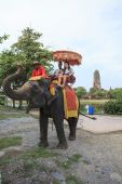 AYUTHAYA THAILAND-SEPTEMBER 6 : tourist riding on elephant back  — Stock Photo