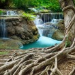 Постер, плакат: Banyan tree and limestone waterfalls in purity deep forest use n