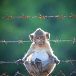 Little monkey climbing on steel fence — Stock Photo #54302677