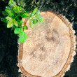 Tree bark wood cutting and some green leaves growthing against w — Stok fotoğraf #55471247