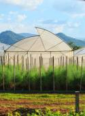 Green house for arganic vegetable plant in clean agriculture ind — Stock Photo
