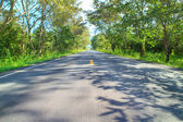 Asphalt road perspective to forest — Stockfoto