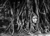 Buddha head and bayan tree root in wat mahathat temple Ayutthaya important unesco world heritage site in thailand — Stock Photo