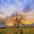 Beautiful landscape of dry tree branch and sun flowers field against colorful evening dusky sky use as natural background,backdrop — Stock Photo #61104277