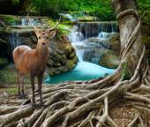 Sambar deer standing beside bayan tree root in front of lime sto — Stock Photo