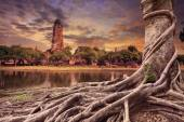 Big root of banyan tree land scape of ancient and old pagoda in  — Stock Photo