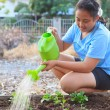 Girl watering vegetable plant in home garden field family relaxi — Stock Photo #67617005