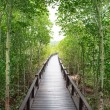 Wood way bridge in natural  mangrove forest — Stock Photo #69827507