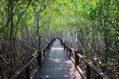 Beautiful land scape of wood way bridge in natural mangrove fore — Stock Photo