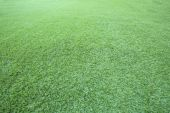 Green grass floor use as natural background,backdrop and texture — Stock Photo