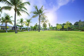 Beautiful green grass field in public park against vibrant blue — Stock Photo