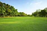 Beautiful morning light in public park with green grass field an — Stock Photo