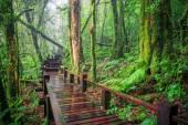 Moisture of mountain rain forest Doi Inthanont National Park Chi — Stock Photo