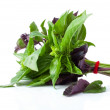 The Green and Purple Basil — Stock Photo #52253403