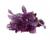 Bright Purple Basil Bundle — ストック写真