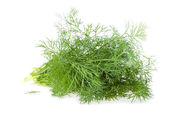 The Bundle of Fresh Dill — Stock fotografie