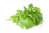 The Bunch of Salad Rocket — Stockfoto