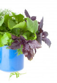 Blue Cup with Greens for Salad — Foto de Stock