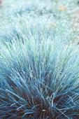 Blue Grass Bushes in the Morning Dew — Stock Photo