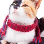 Joyful Calico Cat — Stock Photo #56719273