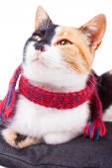 Joyful Calico Cat — Foto de Stock