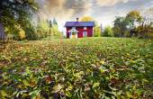 Red cottage, autumn leaves in a rural landscape — Stock Photo