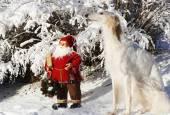 Father Christmas and giant Borzoi dog — Stock Photo