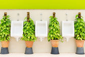 Restroom interior with white urinal row and ornamental plants — Stock Photo