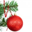 Red ball on the branch of a Christmas tree on white background. — Stock Photo #63559057