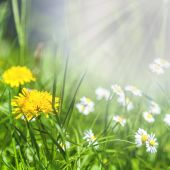 Spring flowers of dandelion and daisies in green grass. — Stock Photo