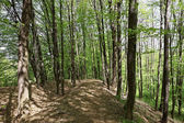 Green deciduous forest on a sunny day. — Stock Photo