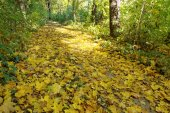 Path is in the autumn forest. — Stock Photo
