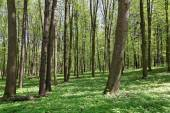 Green forest on a sunny day. — Stock Photo