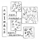 Animals Chalk Infographic — Stock Photo