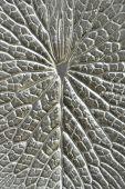 Silver lotus texture — Stock Photo