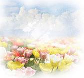 Sfondo con le nuvole e tulipani — Foto Stock