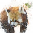 Watercolor Image Of  Red Panda — Foto de Stock   #53589491