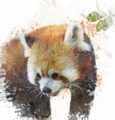 Watercolor Image Of  Red Panda — Stock Photo
