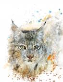 Watercolor Image Of Lynx — Stock Photo