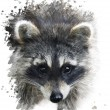 Raccoon Portrait — Stock Photo #57044083