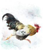 Coq en cours d'exécution — Photo