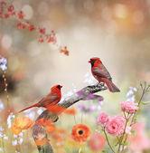 Northern Cardinals — Stock Photo